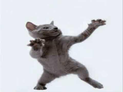 Cat Dancing to Hamster Dance