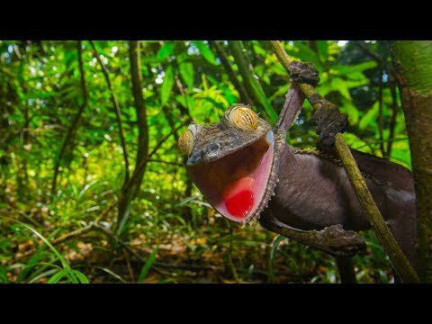 How to Photograph Rainforest Wildlife | Wildlife Photography Tips