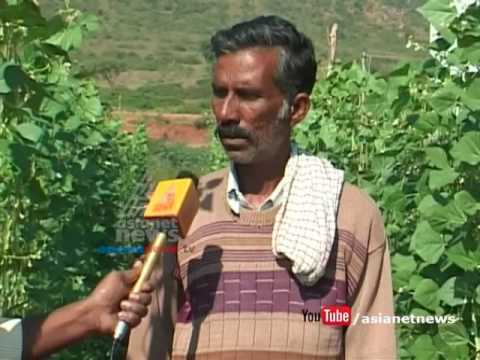 severely harmful pesticides used in vegetable from Karnataka to Kerala