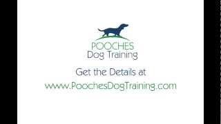 Puppy Obedience Training Somerset Nj - Free Consult - 800-906-1560