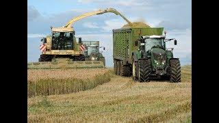 Lohnunternehmen Blunk in der GPS - Ernte / Krone Big X 1100 / Fendt Traktoren