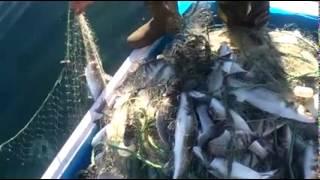 Misina ağı ile balık avlama