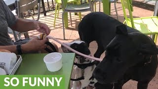 Pair of dogs eat lunch at dog-friendly restaurant