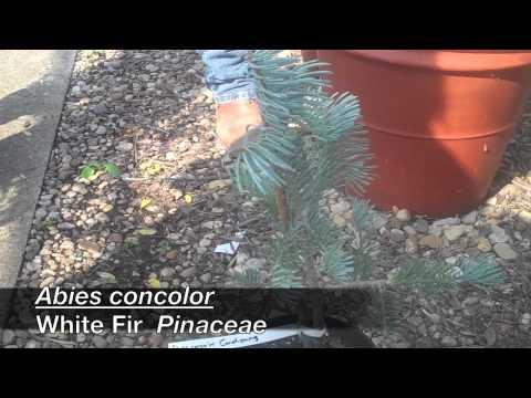 Hort 306/608 Plant List 8-1