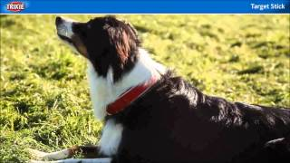 Target Stick And Clicker Training For Dogs