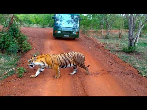 जंगल सफारी नया रायपुर jungle safari naya raipur awesome view