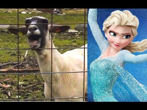 Let It Goat - Disney Frozen (Edition)