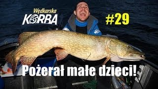 Rekordowy szczupak 130 cm! Gumy na ogromne szczupaki, Wędkarska Korba #29