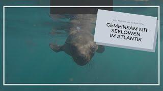 Mit Robben schwimmen in Südafrika - im Atlantik. Sind da auch Haie?