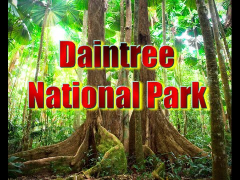 Top tourist attractions in Australia part7 |  Daintree National Park Vocation travel video guide