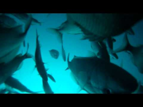 EPIC Catching fish 100FT down offshore GOPRO HD