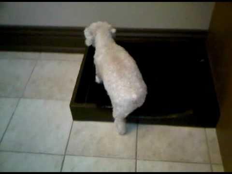 Doggy flush \