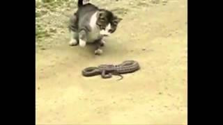 Кот против змеи ! Приколы! смешные коты смешные животные! / fun! funny animals! funny cats