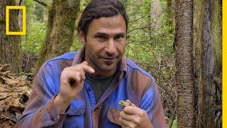 Encountering a Deadly Pit Viper | Primal Survivor