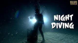 Night Diving! | JONATHAN BIRD