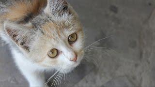 Социальный ролик: Помощь бездомным животным.
