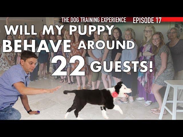 Training My Puppy To Listen Around 22 Guests!