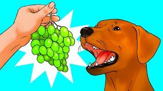 犬にブドウはNG!?53の疑問にお答えします!