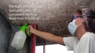 Mold Remediation Specialists - Mold Cleanup San Diego CA (619) 449-9611
