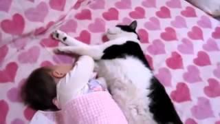 Кот кричит на хозяйку Уйди -Уйди