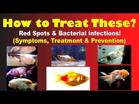 How To Cure Red Spots & Other Bacterial Infections!