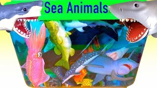 Learn About Sea Animals! NEW Sharks Whales JAWS Fish Water Ocean Fun Toys Learn Colors Toys for Kids