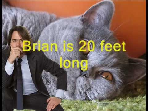 the biggest cat in the world ever youtube