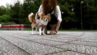 Популярная наука: будущее. (C6-7). Коммуникация (общение). Общение с собакой.  ● документальные