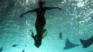 Mermaids: The Body Found On Animal Planet Argues Mythical Sea Creatures Are Aquatic Apes