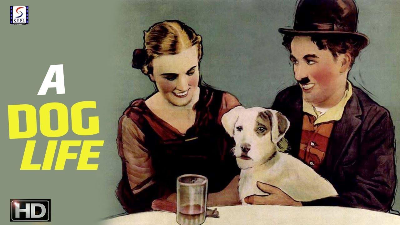 A Dogs Life - Charlie Chaplin Comedy Movie - HD - YouTube