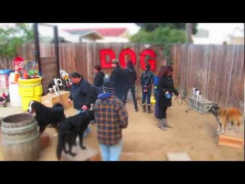 Canine Circus Class December 2011
