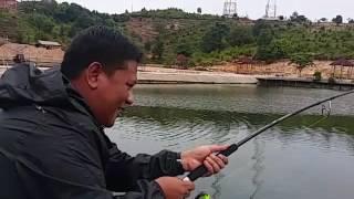 Video 100kg Goliath Grouper at Barelang Pond. download MP3, 3GP, MP4, WEBM, AVI, FLV Agustus 2018