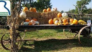 How-to Preserve Your No-Carve Pumpkin