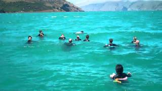 awesome day out swimming with the dolphins in Akaroa with Black Cat Cruises