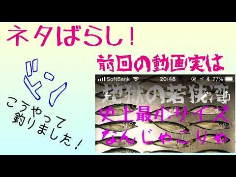 アジング豆アジの釣り方実はこれで釣れます 前回の動画のネタバラシ