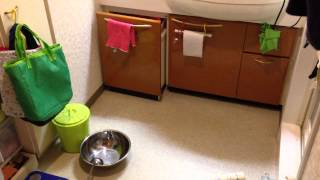 ダイソン並みの変わらぬ吸収力?あらゆるものを「洗面台の下」に吸い込むフェレット