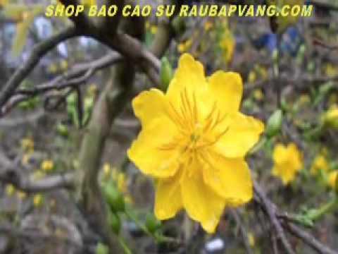 Remix Xuân 2013 - Nhạc Xuân Hay 2013 - Nhạc Tết - Nhạc Xuân Quý Tỵ
