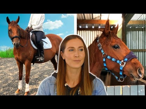 I bought a pregnant horse without knowing it!
