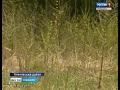 В Чувашии собственника неиспользуемых земель сельхозназначения впервые лишили участка
