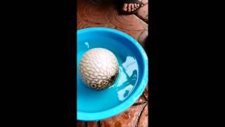 teoría sobre el veneno de pez globo somosaltiplanocom