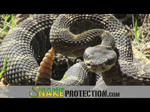 Snake Protection Chaps, Gators, Pants and Boots