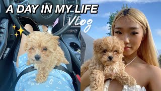 I GOT A NEW PUPPY!  | A DAY IN MY LIFE