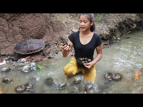 Download Survival in the rainforest - Found catch snail in mud lake & Snails curry spicy delicious for dinner