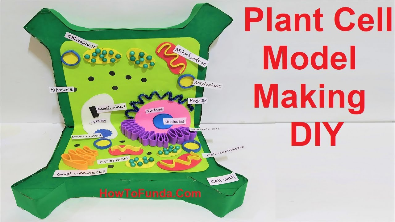 plant cell 3d model making DIY for science fair project ...