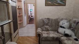 2 квартира Евроопт г.Гомель ул.Чечерская,68  +375296095817