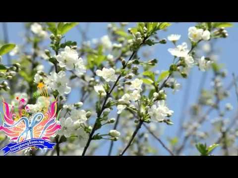 Secret Garden - First day of spring