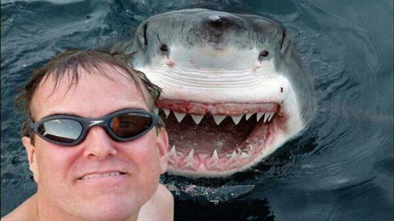 Most Dangerous Selfies Ever YouTube - The 21 best animal selfies of all time