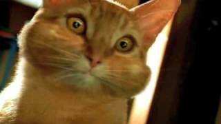 Purina Maxx Cat Commercial