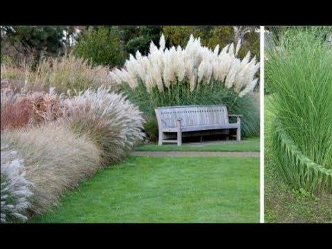 Растут много лет, требуют минимум удобрений и ухода! Злаковые травы: вне времени, вне сезона