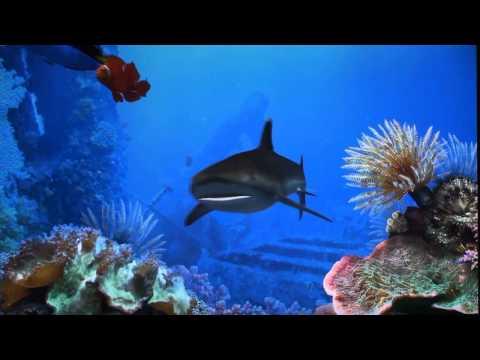 6 Aquarium Screensavers Compared
